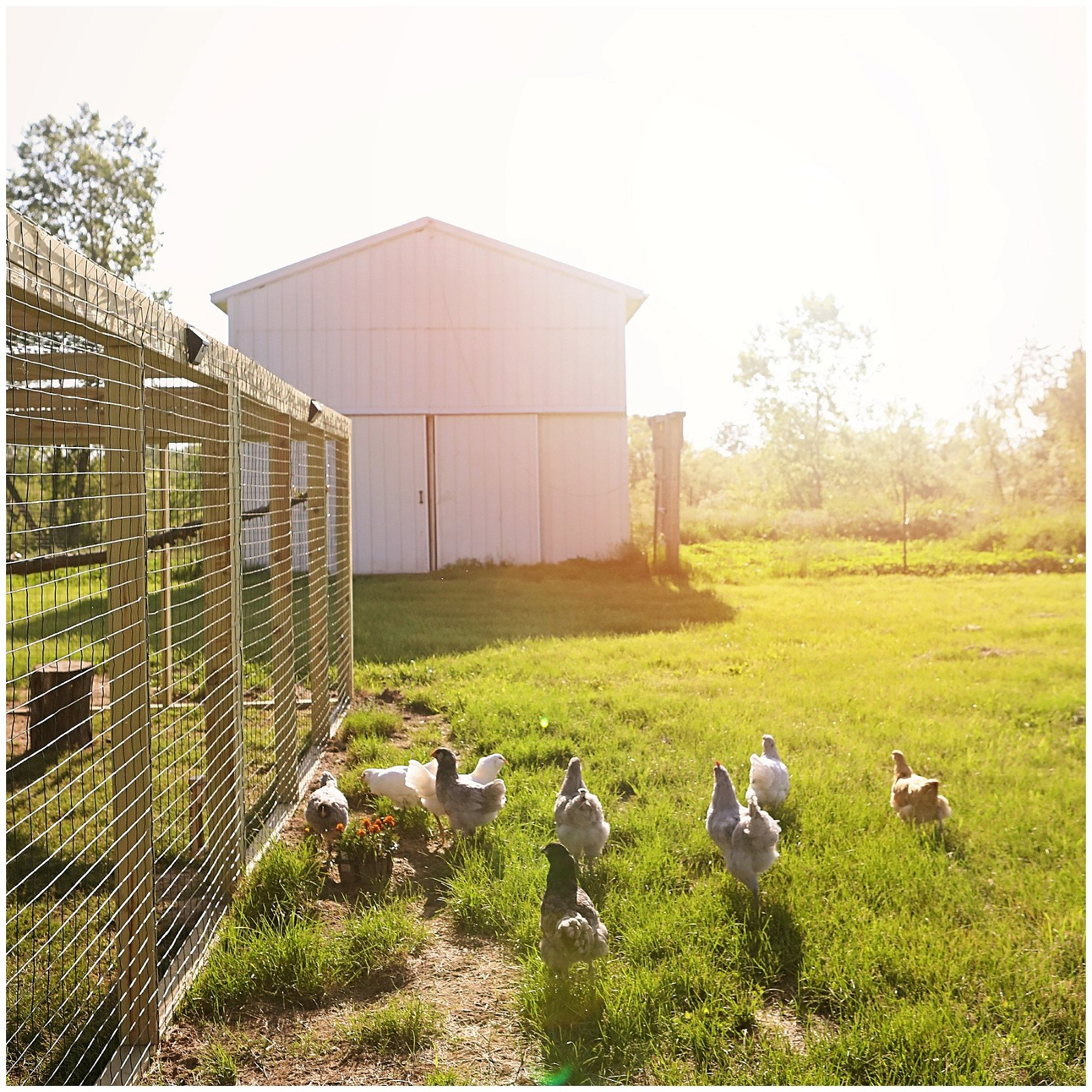 Chicken coop with run tour