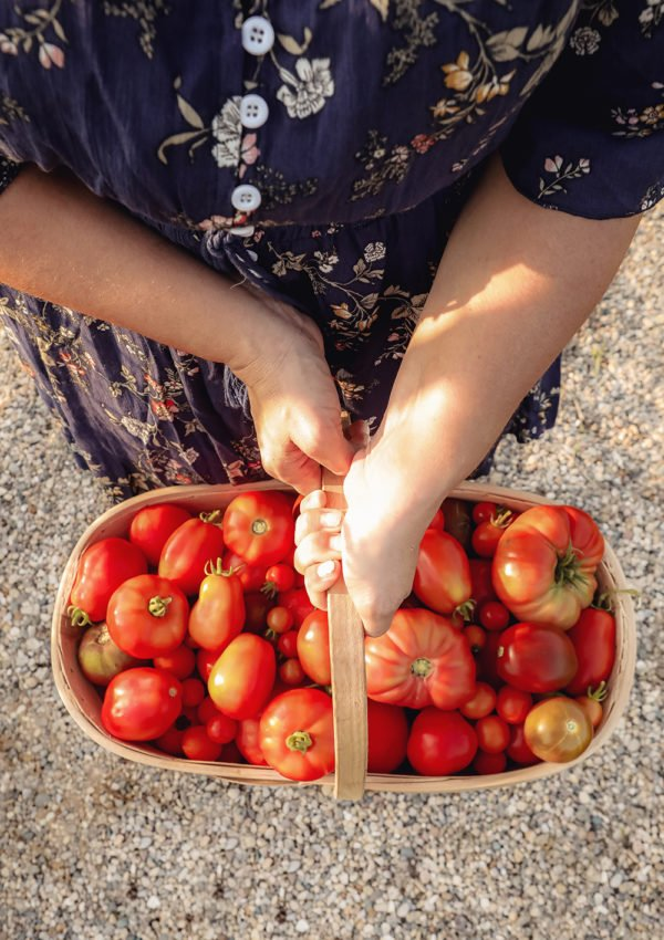 Tips for growing tomatoes from seeds & through the season