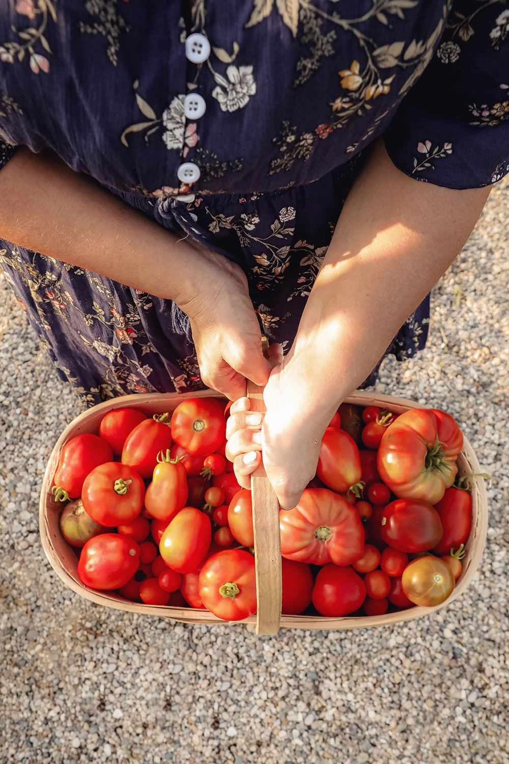 tips for growing tomatoes from seeds