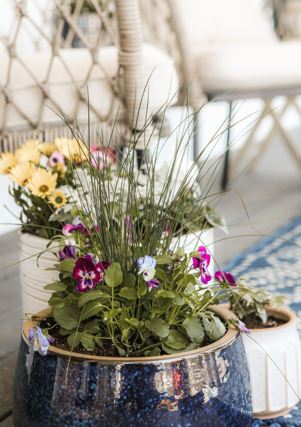 Tips for planting flowers in pots