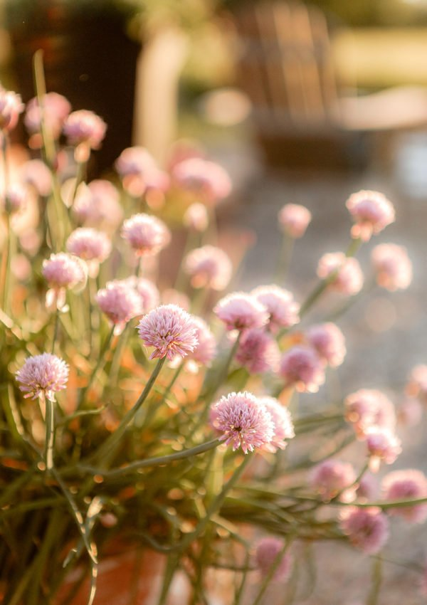 Companion Planting : Flowers & Herbs that help repel bugs