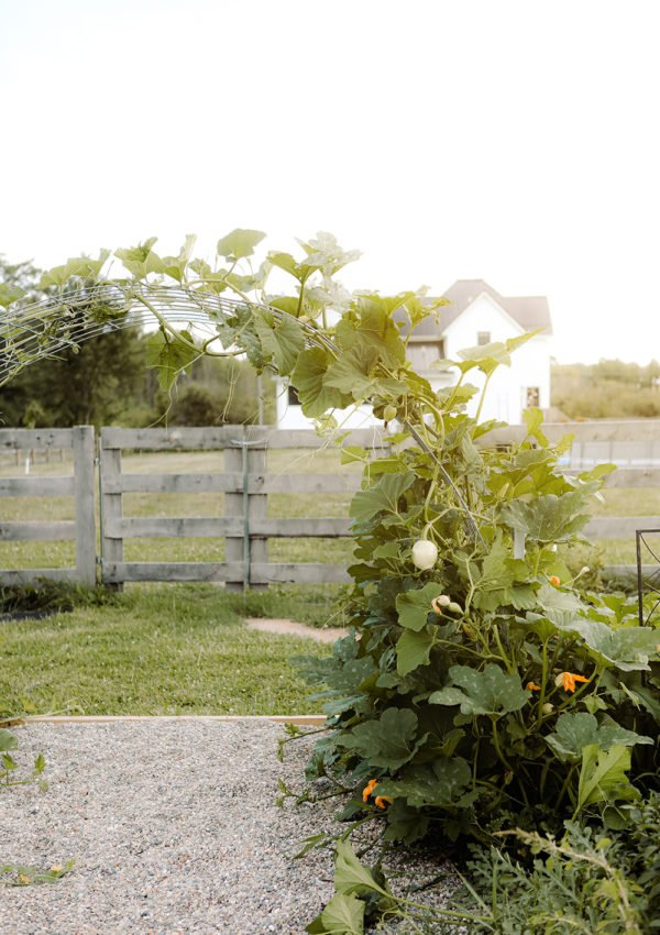 How to make a pumpkin trellis